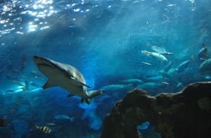 Žraločí turistika levně. Na Jadranu